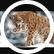 Lynxgirl000