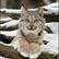 Lynxy1o