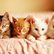 Meowjamarkitten