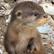 OtterStarr