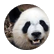 PandaFam223
