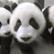 PandaGal724