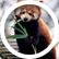 PandaLover01