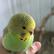 ParakeetsPeople