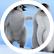 PenguinzRUs