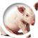 Piggy_Piller