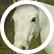 Ponylover2012
