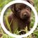 Puppy56749