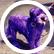 PurpleDerpyDoggy