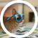 Rabbit24