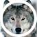 Terraria_Wolf
