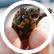 Turtle7777