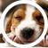 beagle141