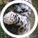 blueleopard3