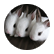 bunnydays