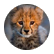 cheetah2930