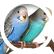 chirpingbird96
