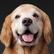 dogperson333