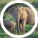 elephantgirl17