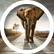 elephantluver6160