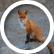 foxgirl551