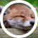 foxseed