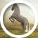 heavenly_horses09