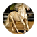 horsecrazy8