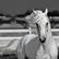 horsegirlkel