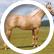 horses222222