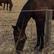 horsesandme13