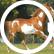 horsesandponies