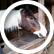 horsesrock20