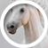 horseyporsey