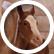 horsez123
