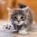 kitten67