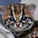 kittencarol