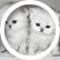 kittykatgirl22