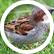 littlesparrow