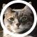 lovebooksandcats