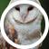owl_stitch13