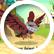 phoenixthefirebird2