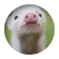 pigs4713