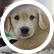 puppydog64