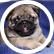 puppypawbark