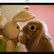 rabbit4212