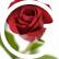 rosenelsonwest