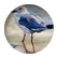 seagullstory