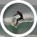 surfhawk