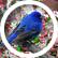 treatbird